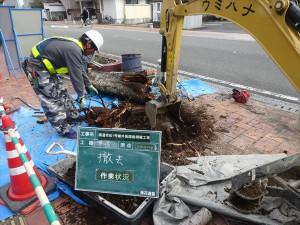 街路樹枯損木植え替え_R